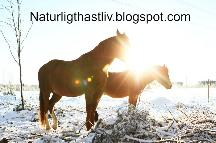 Naturligt Hästliv