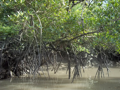 (Bangladesh and West Bengal  - India) – Sundarbans