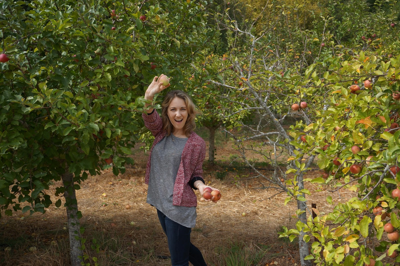 Greysuede.com Apple Picking Swanton Pacific Ranch