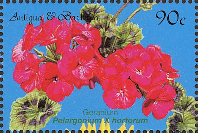 2000 Geranium, Pelargonium x hortorum, Antigua and Barbados