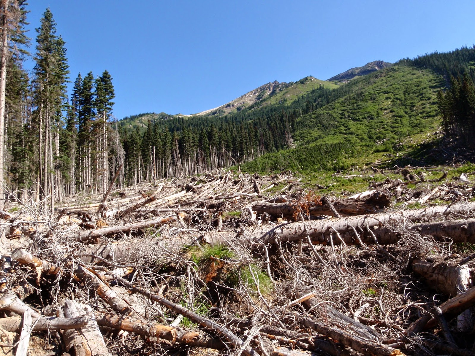 Glacier Peak Wilderness - Avalanche area along Buck Creek