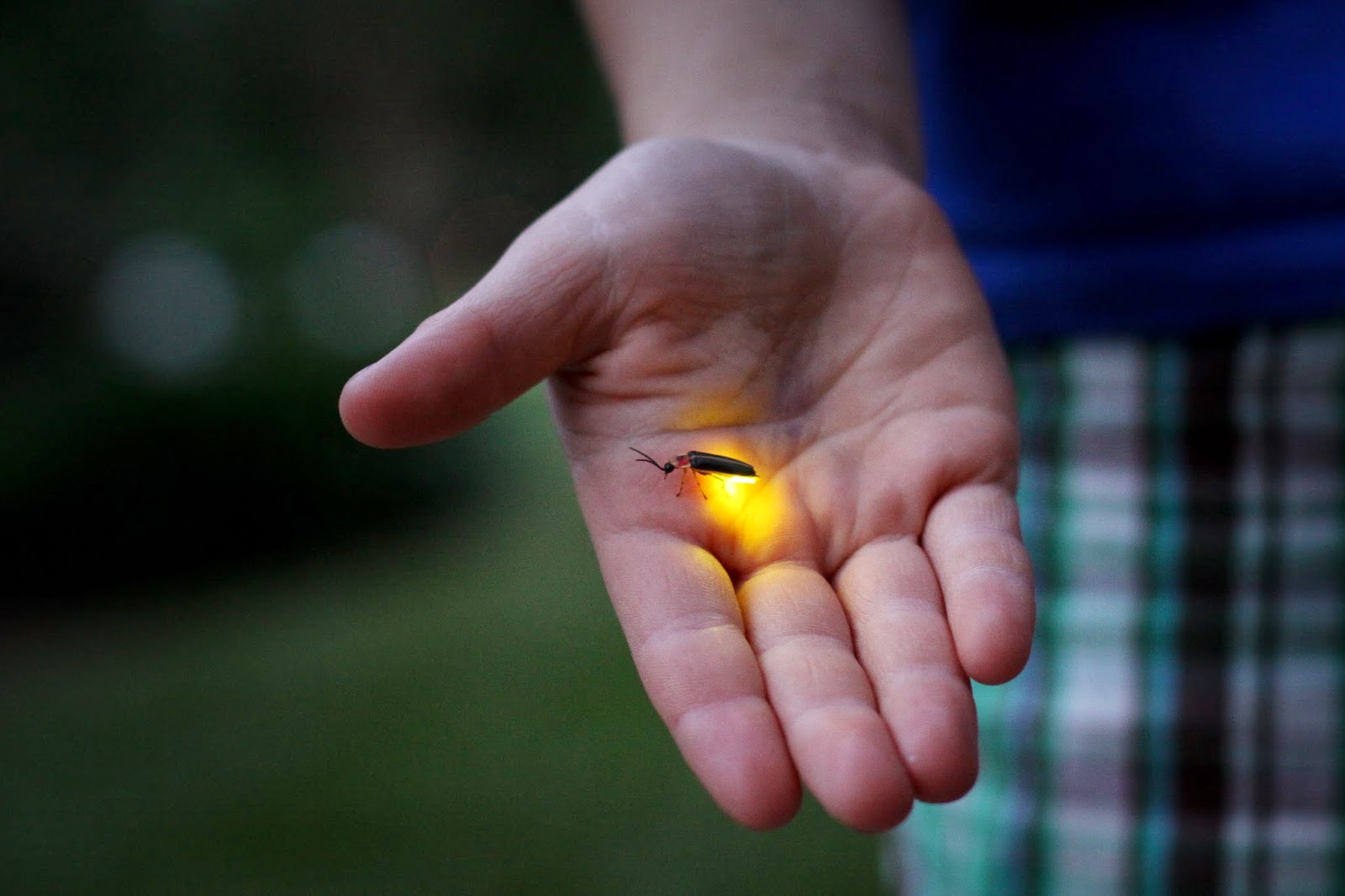 top 5 interesting facts about lightning bugs or fireflies news