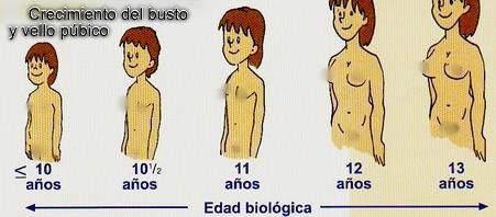 Las hormonas femeninas para hombres - Salud Y Estetica