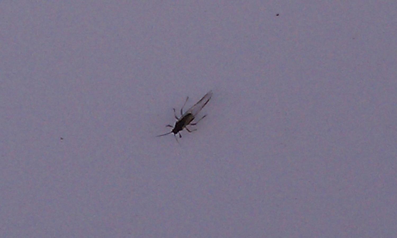 Small Black Flying Bugs In Bedroom Similiar Small Black Beetle Identification Keywords