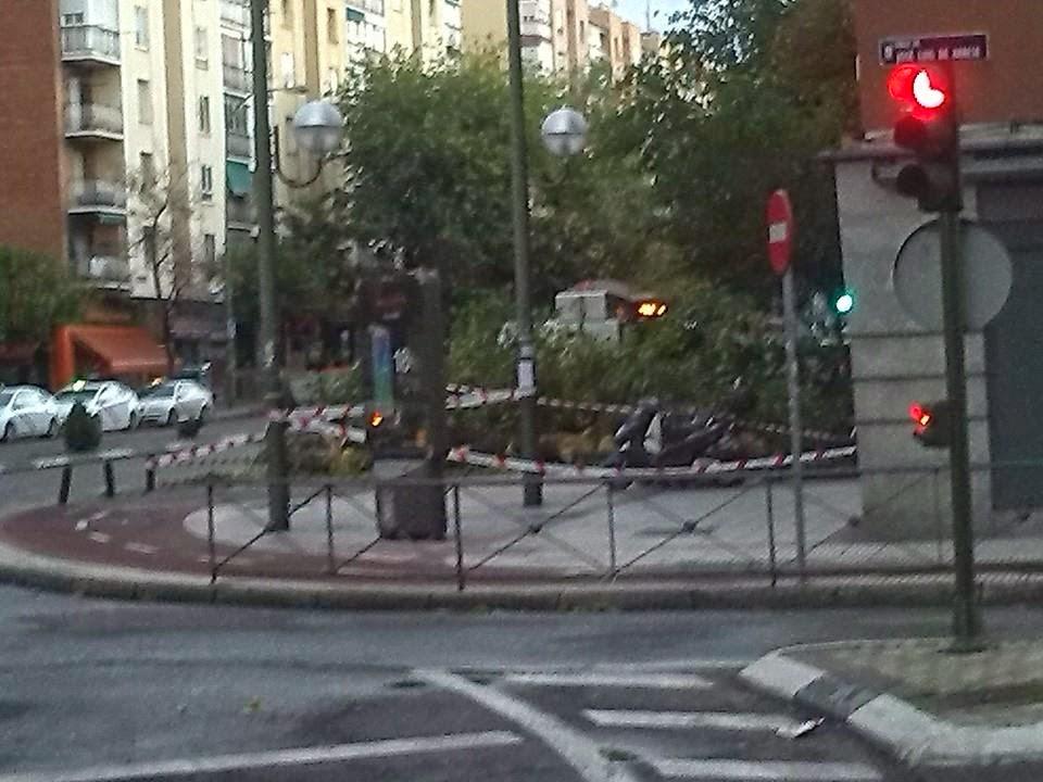 Árbol caído en la Elipa - 12/10/2014