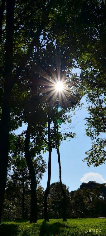 Bosque y sol