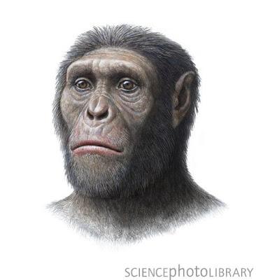 hominidos de africa Australopithecus sediba