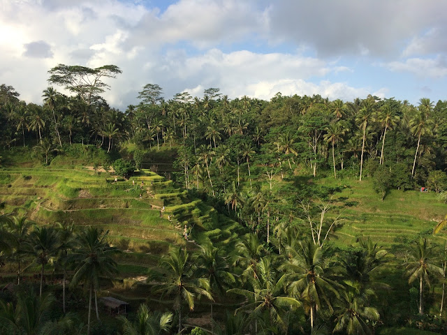 Rice terrace cafe ubud bali travel adventure for Tegalalang rice terrace ubud
