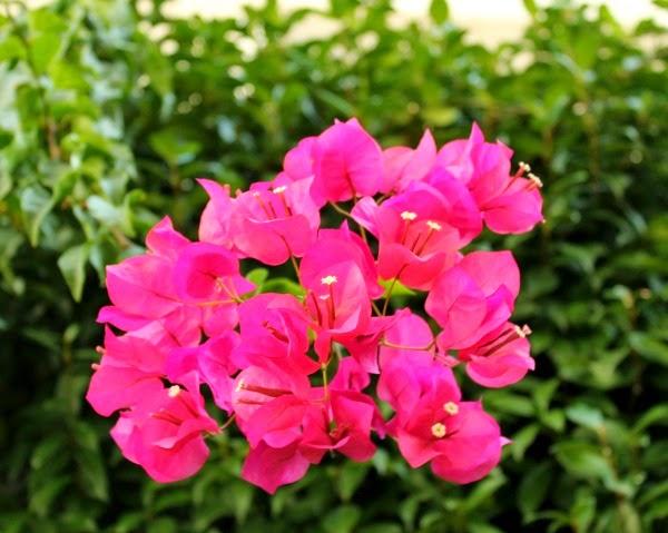 Un taller en la torre plantas y flores de la a a la z b - Plantas con flor de interior ...