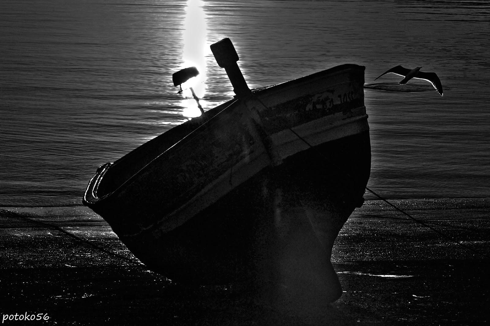 La Barca y la Gaviota