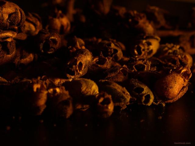 Bunga Naga jika layu akan jadi seperti tengkorak