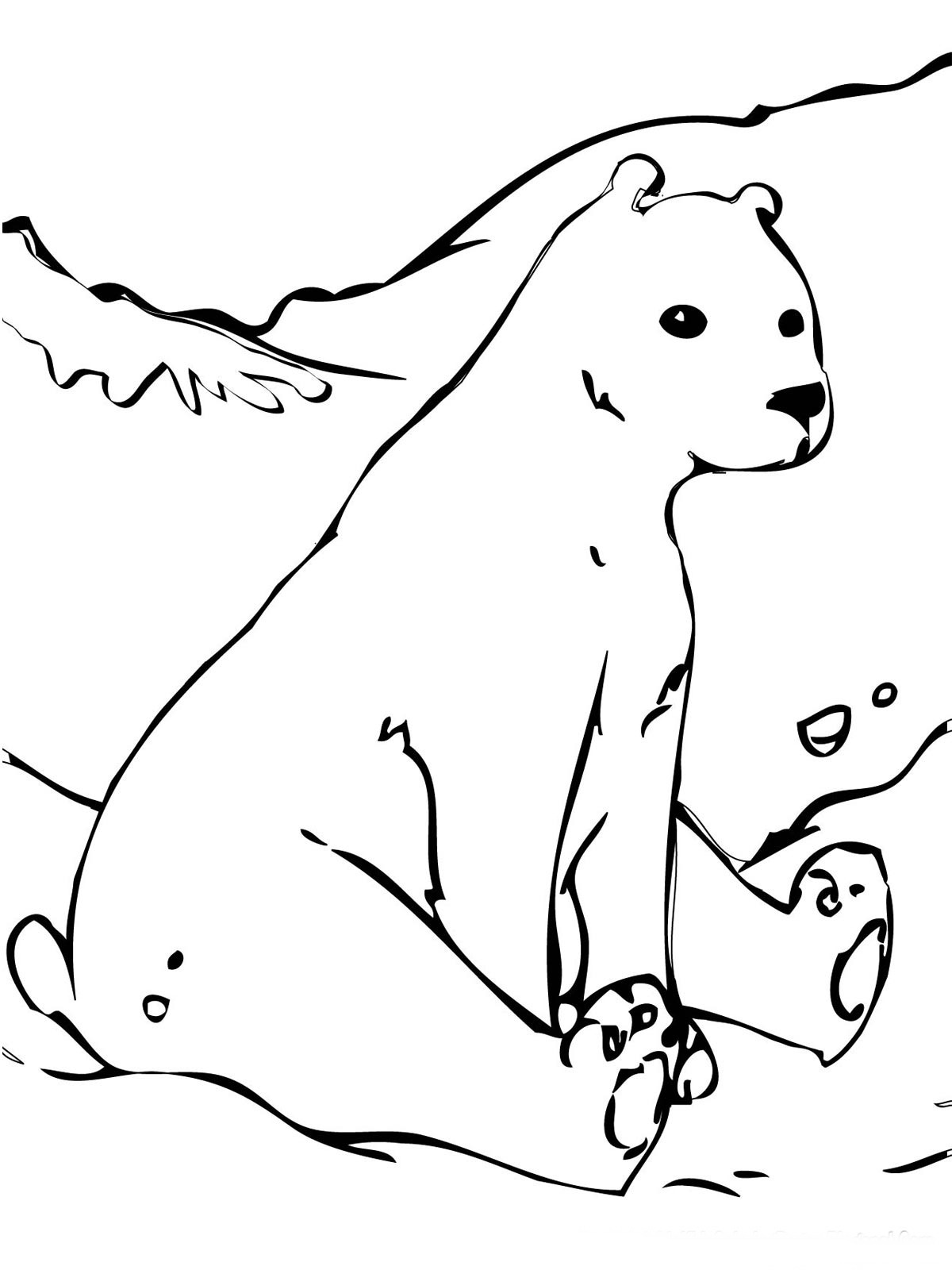 coloring page polar bear - bear coloring pages realistic realistic coloring pages