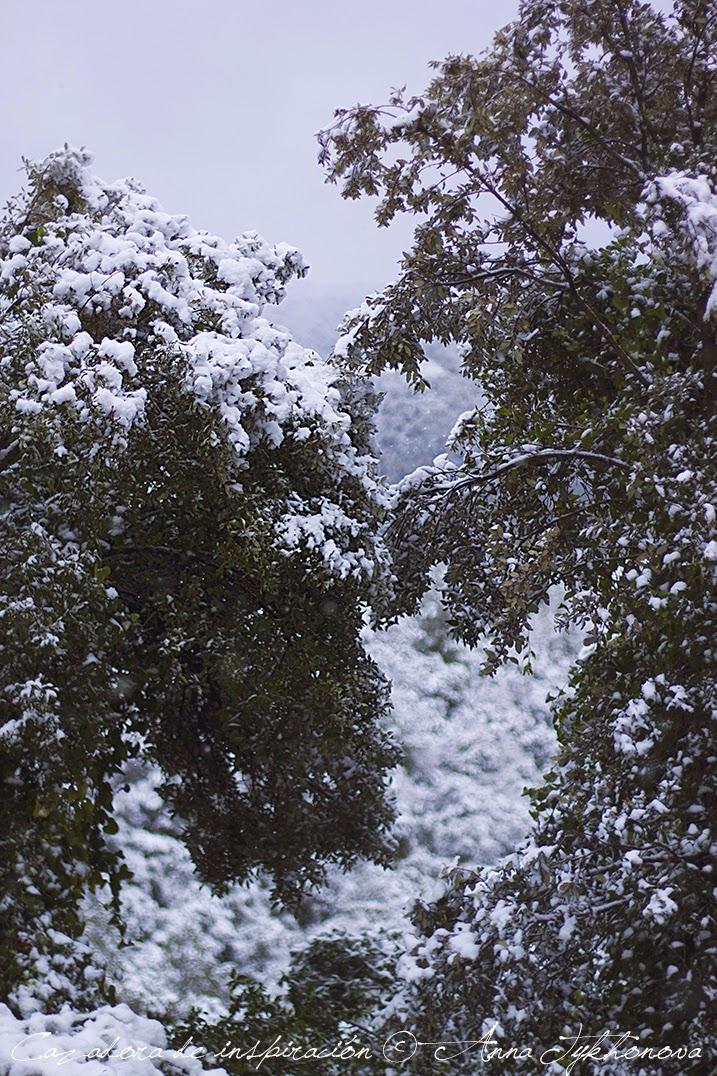 Cazadora de inspiración © Anna Tykhonova - snow paradise