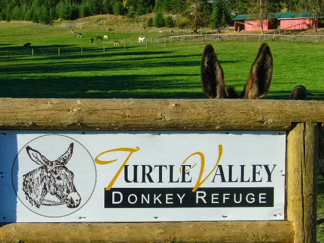 Turtle Valley Donkey Refuge
