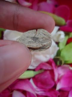 Mustika Bunga Jamur Asli