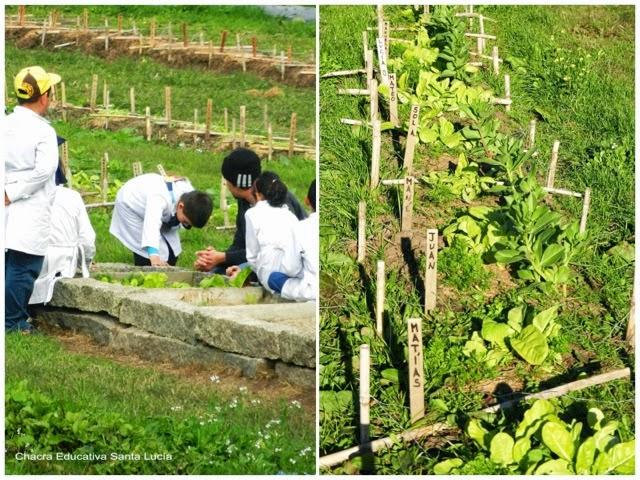 alumnos en clase - plantas en crecimiento - Chacra educativa Santa Lucía