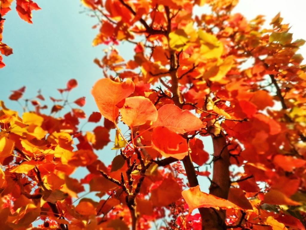 The Keyhole: I Love Autumn