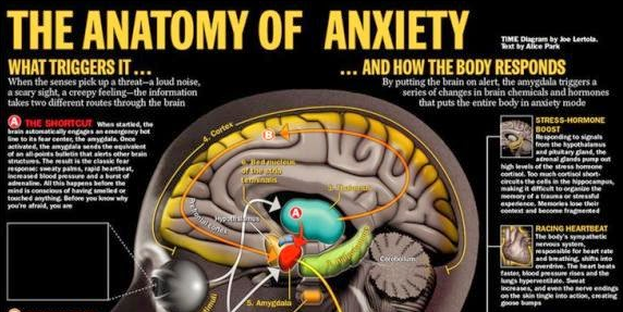 The Anatomy Of Anxiety Tech Soft