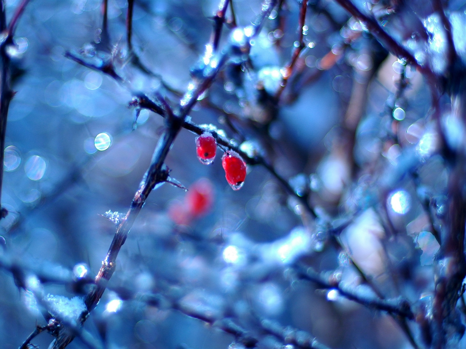 google winter screensavers and wallpaper - photo #38