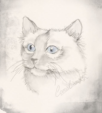 Cat Sketch