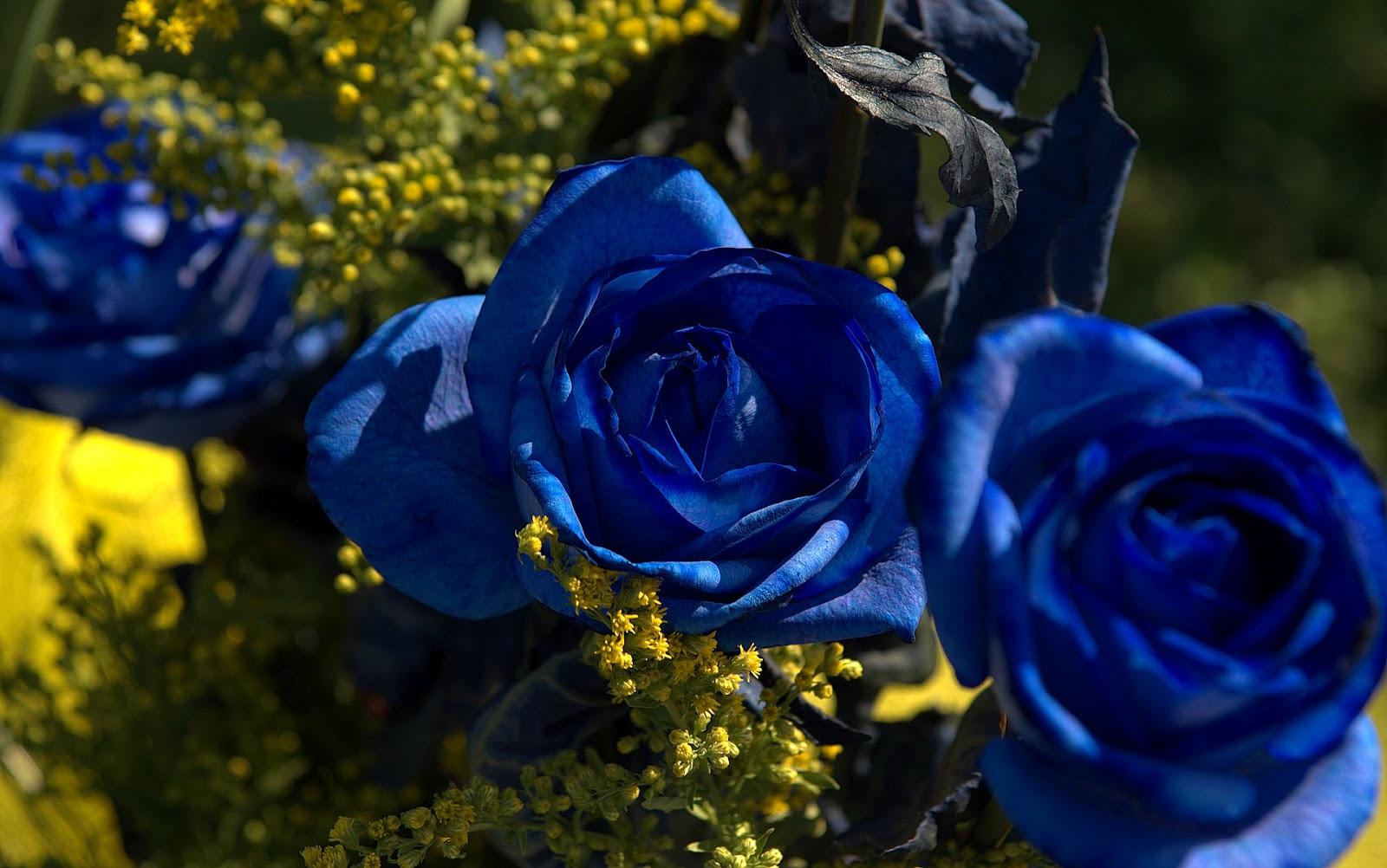 Fun blue roses meaning fun izmirmasajfo