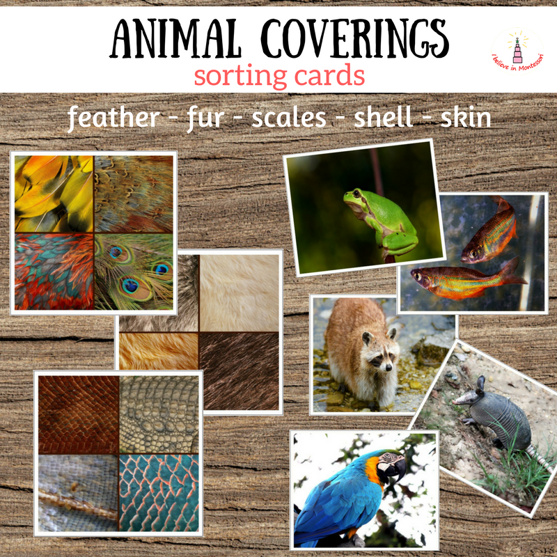 Animal coverings cards