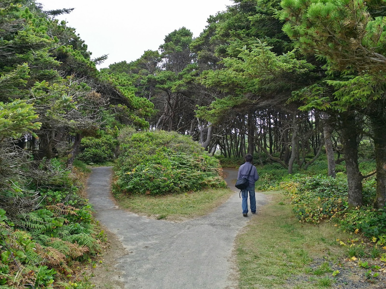 paved trail above Seal Rock beach