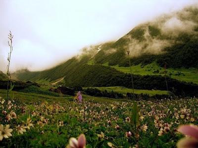 Himalaya Valley of Flowers, himalaya
