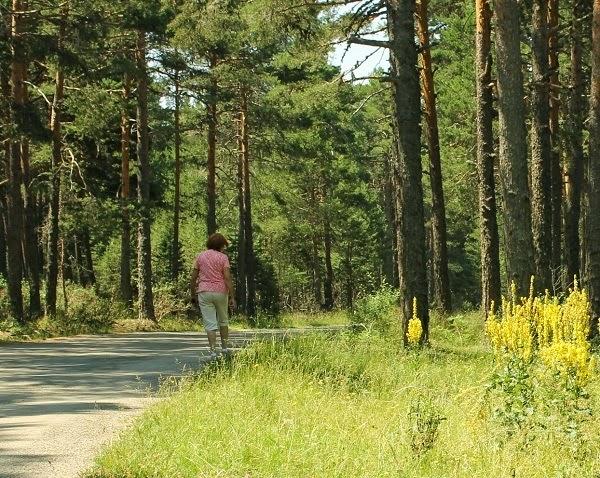 buscando setas junto al camino