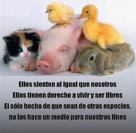 RESPETO Y DIGNIDAD ANIMAL