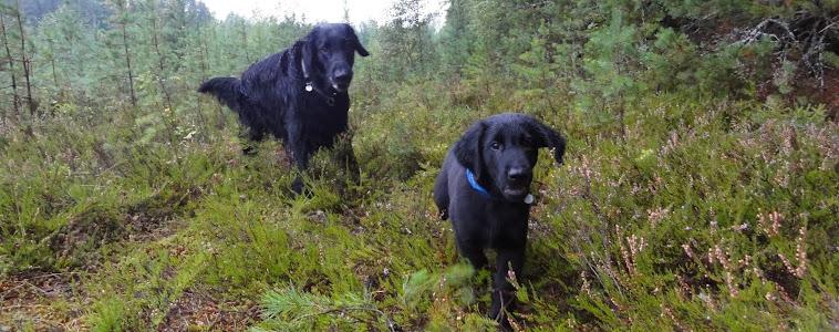 Rasmus & Sälli