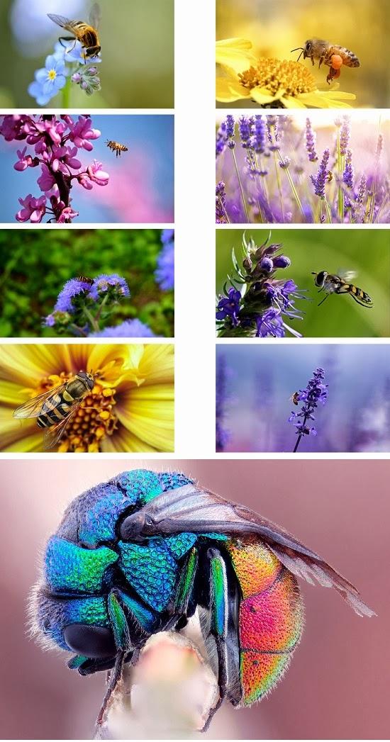 Bee Animal Theme For Windows 7 And 8 8.1 9