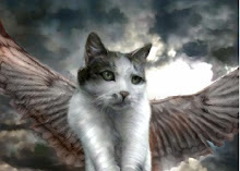 angel_cat_Wallpaper_0ac7z - I am watching the watcher - Introduce Yourself