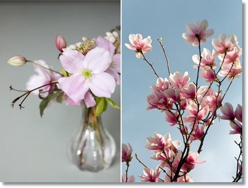 magnolia, bukett magnolia, magnolia bouquet, istället för magnolia, instead of magnolia