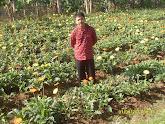 3. Kebun Bunga, Pasir Halang - Bandung