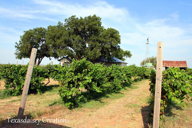 Seymour Texas Generations Vineyard 12