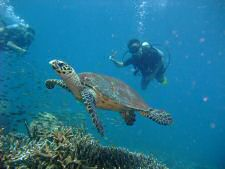 Diving with turtles in the waters around Tioman island