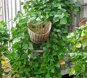 5 Containers to Use Instead of Flower Pots for Your Veggies