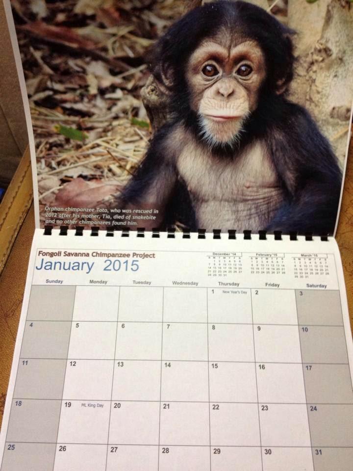 Fongoli Savanna Chimpanzee Project: Fongoli chimpanzee 2015 calendars ...