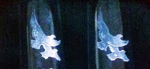 Copas Brindis de Boda con palomas