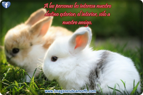 Imagenes de amistad y amor con frases bonitas para FaceBook - Imagui