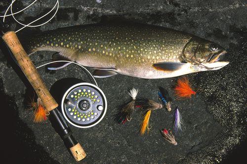 Regarder la pêche le brochet sur de petites rivières