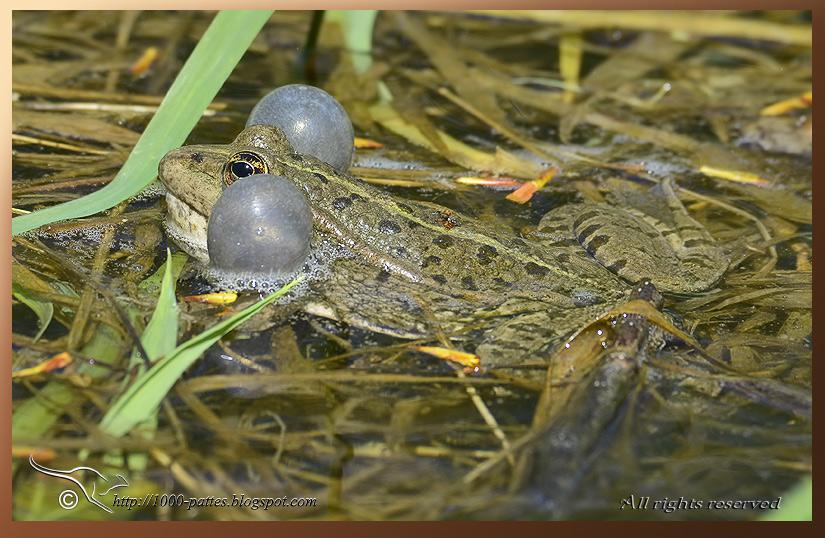 Une grenouille dans la gorge - Le blog de writings2
