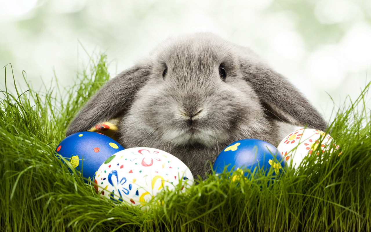 free download easter 2013 hd wallpapers for android tablets tips