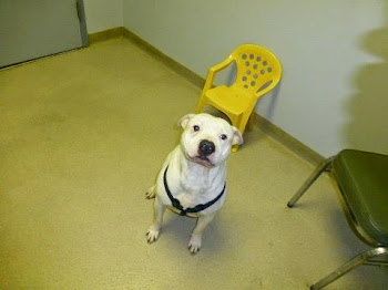 Meeko Needs a Friend...Meet Him Today at the County Dog Pound
