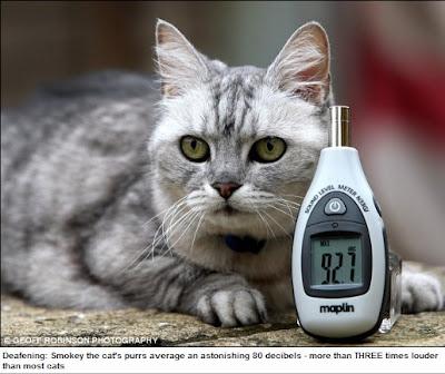 世界嗓門最大的貓