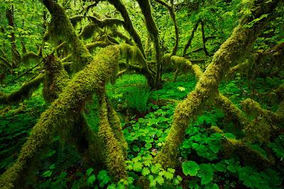 Paisajes del paraíso en Oregon, USA.
