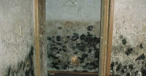 how to get rid of black mold in basement black mold removal diy tips