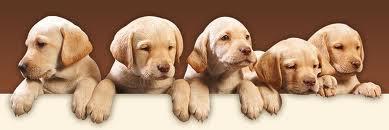 Cachorro, Raças de cachorro