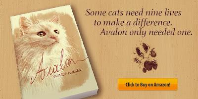 heartwarming cat stories